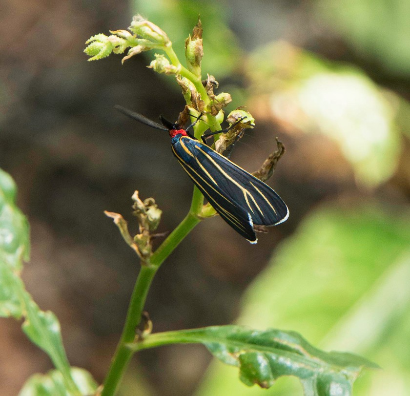 INSECT_DSC1152